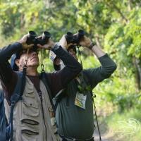 Salidas de Observación de Aves (Birding)